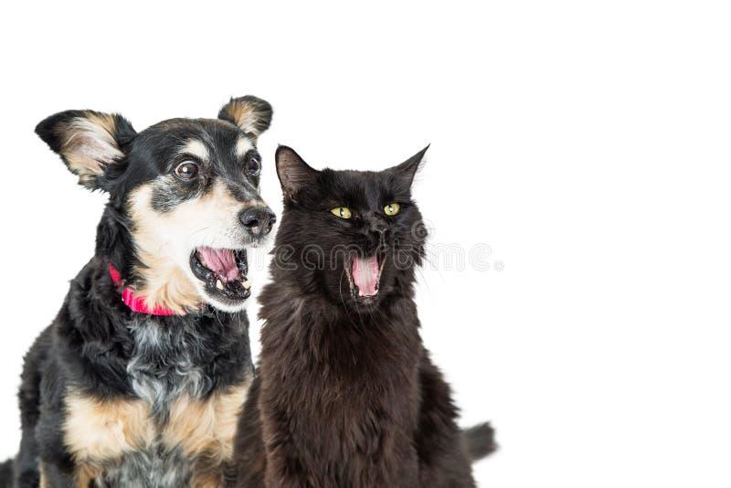 Αστείες σκυλί και γάτα με τις συγκλονισμένες εκφράσεις στοκ φωτογραφίες