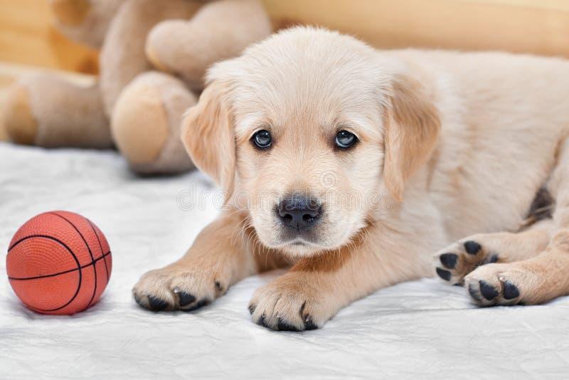 αστείος μικρός σκυλιών στοκ φωτογραφία με δικαίωμα ελεύθερης χρήσης