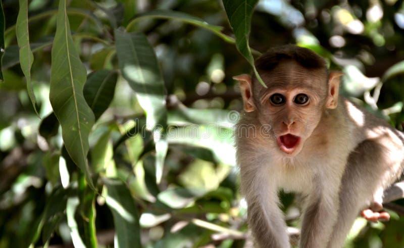 Αστείος πίθηκος με το έκπληκτο πρόσωπο στοκ φωτογραφίες με δικαίωμα ελεύθερης χρήσης