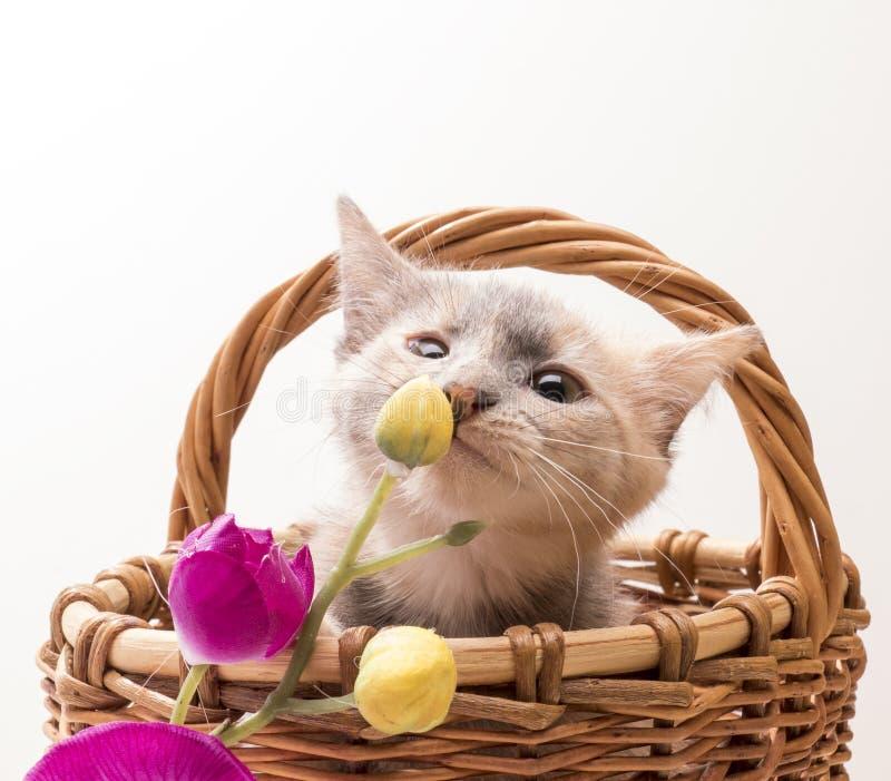 αστείο απομονωμένο γατάκι λίγα άσπρα στοκ εικόνα με δικαίωμα ελεύθερης χρήσης