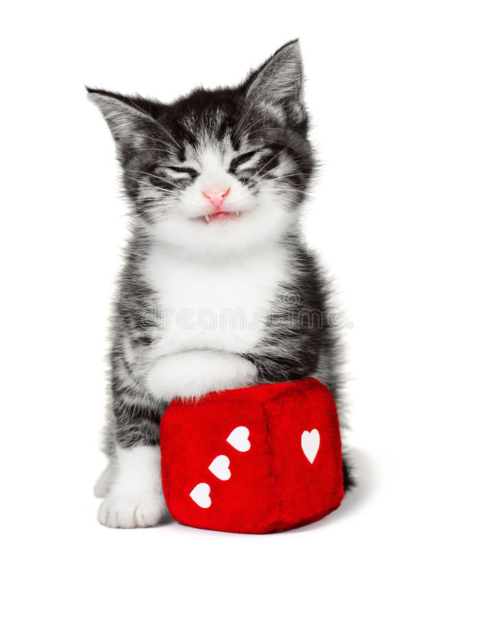 Αστείο γατάκι με έναν μαλακό κύβο στοκ φωτογραφία
