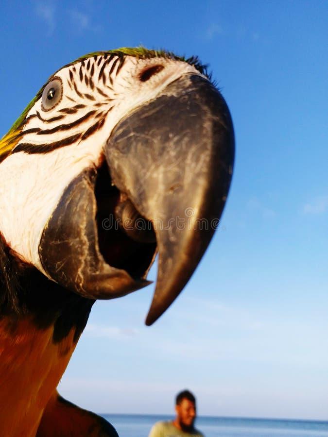 αστείο κατοικίδιο ζώο στοκ φωτογραφία με δικαίωμα ελεύθερης χρήσης