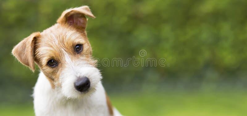 Αστείο κεφάλι ενός ευτυχούς χαριτωμένου σκυλιού κατοικίδιων ζώων κουταβιών - ιδέα εμβλημάτων Ιστού στοκ φωτογραφία με δικαίωμα ελεύθερης χρήσης