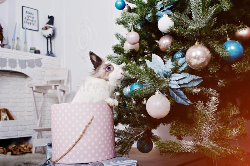 Αστείο κουνέλι λαγουδάκι στο κιβώτιο δώρων κάτω από το νέο δέντρο έτους Ευτυχές winte στοκ φωτογραφίες