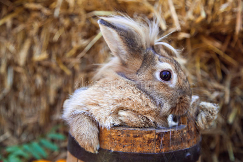Αστείο κουνέλι στον ξύλινο κάδο στοκ φωτογραφία με δικαίωμα ελεύθερης χρήσης