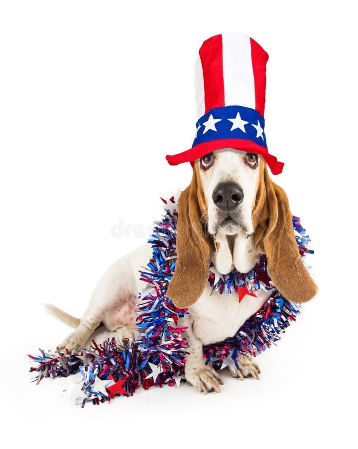Αστείο κυνηγόσκυλο μπασέ ημέρας της ανεξαρτησίας στοκ εικόνες