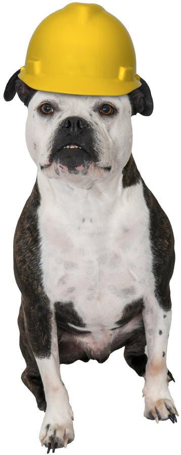 Αστείο σκυλί, εργάτης οικοδομών, που απομονώνεται στοκ φωτογραφία
