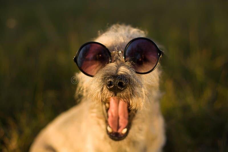 Αστείο σκυλί, κινηματογράφηση σε πρώτο πλάνο στοκ φωτογραφίες με δικαίωμα ελεύθερης χρήσης