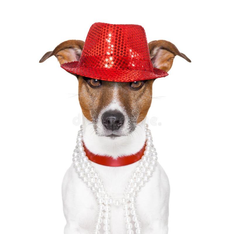 Αστείο σκυλί στοκ φωτογραφία