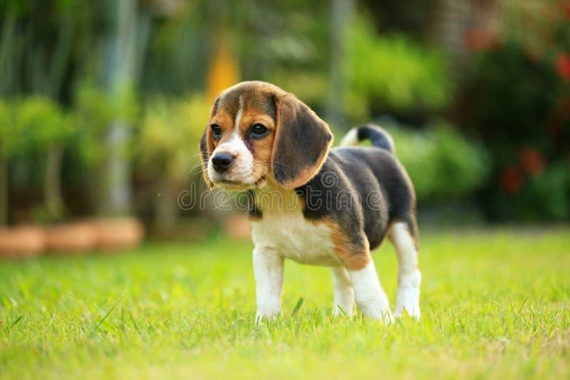 Αστείο χαριτωμένο σκυλί λαγωνικών στο πάρκο στοκ φωτογραφία με δικαίωμα ελεύθερης χρήσης