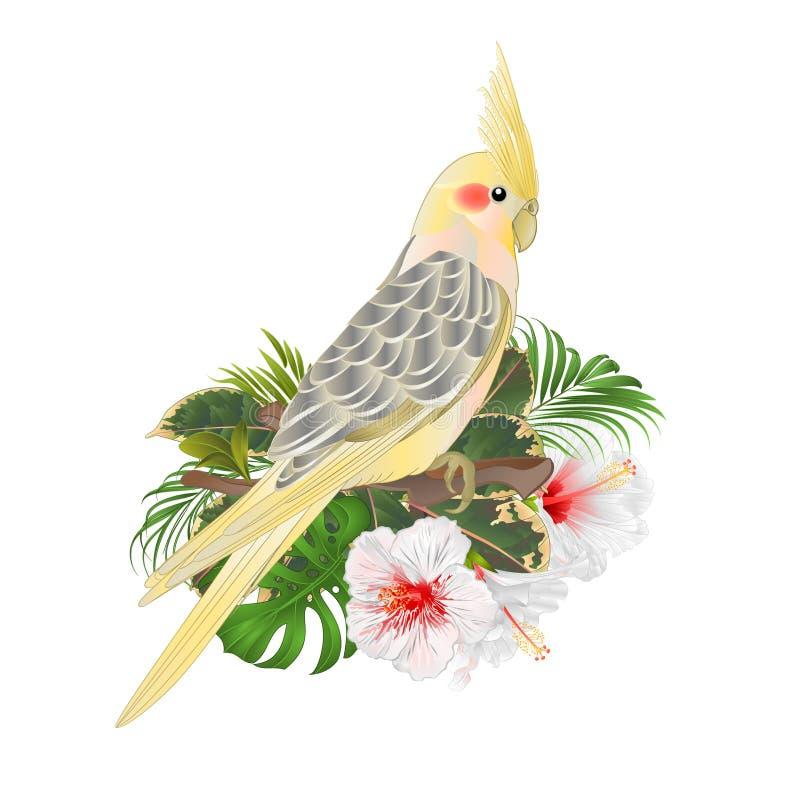 Αστείο χαριτωμένο τροπικό πουλί cockatiel παπαγάλων κίτρινο και άσπρο hibiscus ύφος watercolor σε ένα πράσινο εκλεκτής ποιότητας  απεικόνιση αποθεμάτων
