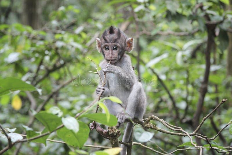 αστείο cub marmoset στη ζούγκλα στοκ φωτογραφίες με δικαίωμα ελεύθερης χρήσης
