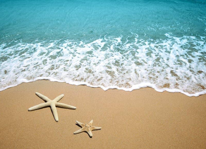 αστερίας άμμου παραλιών στοκ εικόνα με δικαίωμα ελεύθερης χρήσης