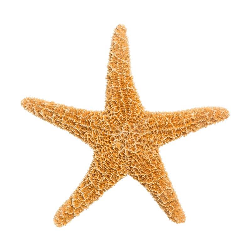 Αστερίας ζάχαρης στοκ φωτογραφία