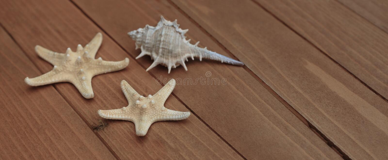 Αστερίας και θαλασσινά κοχύλια, θαλάσσια ναυτική διακόσμηση πέρα από το καφετί ξύλινο υπόβαθρο με το διάστημα αντιγράφων Έμβλημα  στοκ φωτογραφίες με δικαίωμα ελεύθερης χρήσης