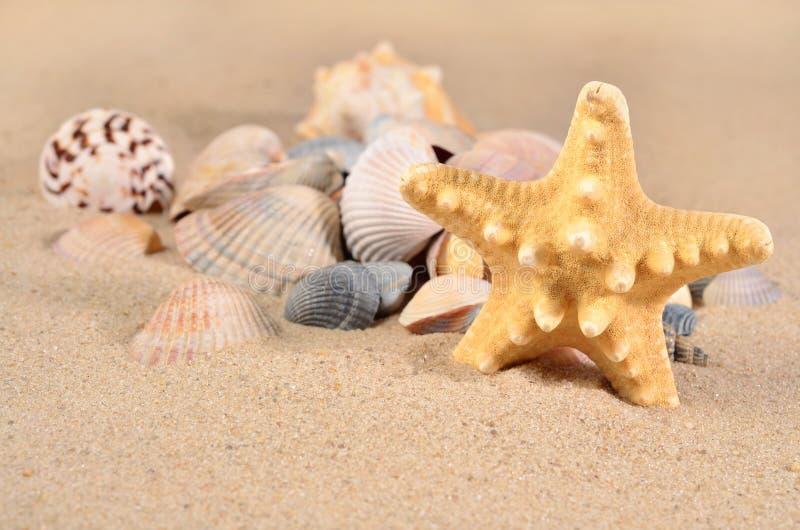 Αστερίας και κινηματογράφηση σε πρώτο πλάνο θαλασσινών κοχυλιών σε μια άμμο στοκ φωτογραφία