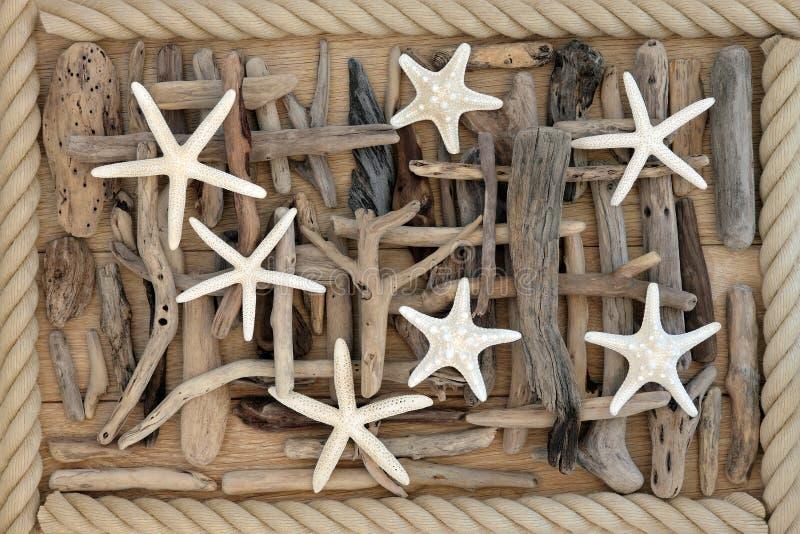 Αστερίας και Driftwood στοκ φωτογραφία με δικαίωμα ελεύθερης χρήσης