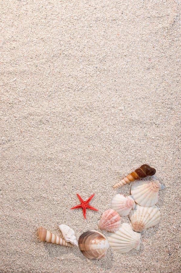 αστερίας κοχυλιών θάλασσας άμμου πλαισίων στοκ φωτογραφίες με δικαίωμα ελεύθερης χρήσης