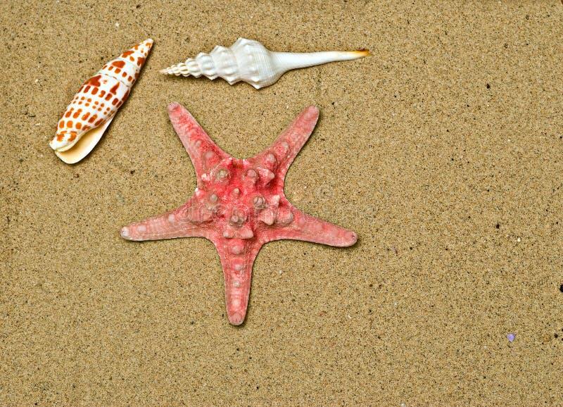 αστερίας παραλιών seasells στοκ εικόνες