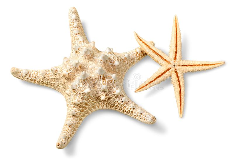 Αστερίας στην άμμο παραλιών κλείστε επάνω στοκ φωτογραφίες