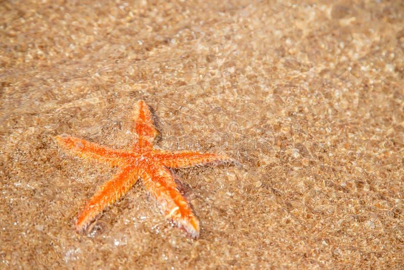 αστερίας στην παραλία στην άμμο r στοκ φωτογραφίες με δικαίωμα ελεύθερης χρήσης