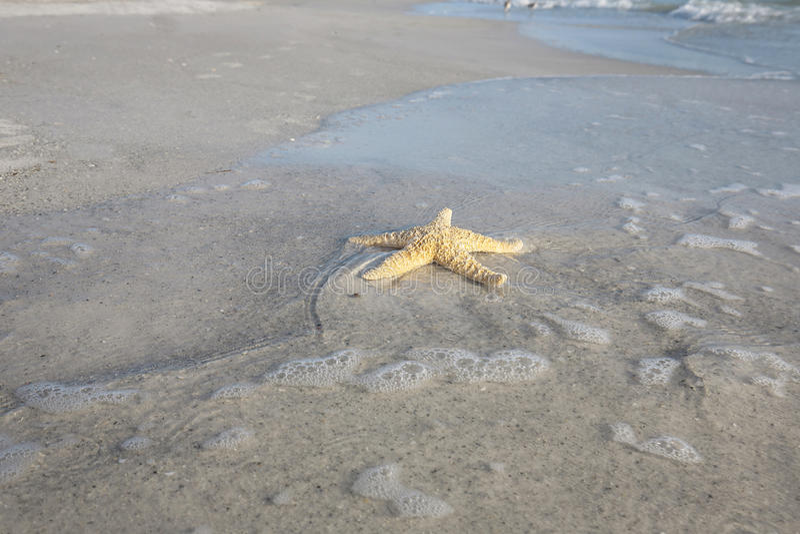 Αστερίας στην παραλία στοκ εικόνες