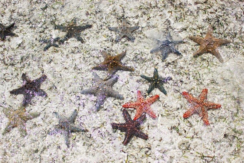 Αστερίες λαμπυρίσματος στη θάλασσα στοκ εικόνες
