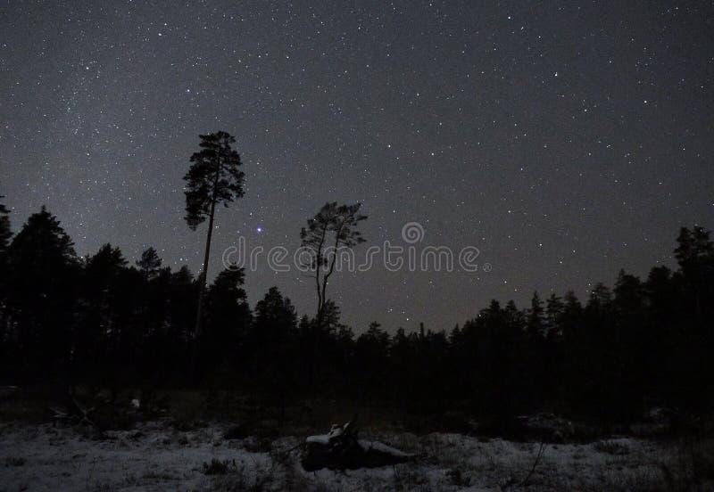 Αστερισμός και χιόνι Lyra αστεριών νυχτερινού ουρανού στοκ φωτογραφία με δικαίωμα ελεύθερης χρήσης