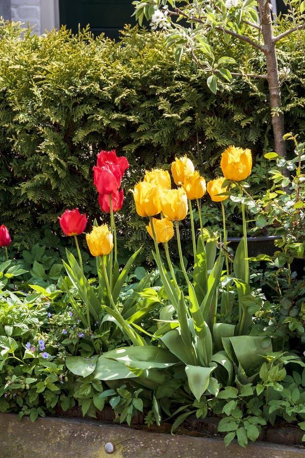 Αστικά λουλούδια Κάτω Χώρες στοκ φωτογραφία