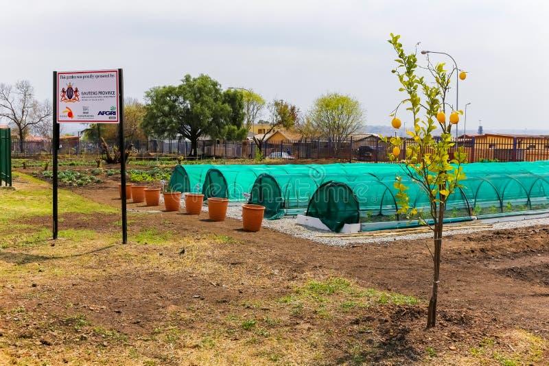 Αστικός κοινοτικός φυτικός κήπος σε Soweto στοκ εικόνες με δικαίωμα ελεύθερης χρήσης