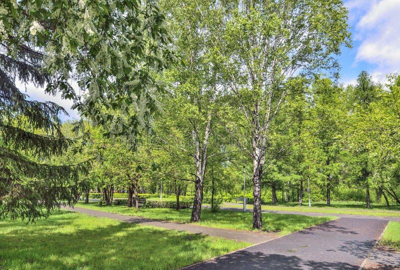 Αστικό τοπίο άνοιξη στο πάρκο πόλεων με τα ανθίζοντας δέντρα κερασιών πουλιών στοκ εικόνες