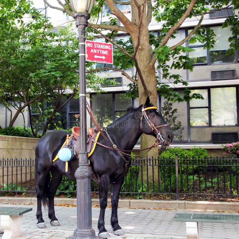 αστυνομία αλόγων στοκ φωτογραφία με δικαίωμα ελεύθερης χρήσης