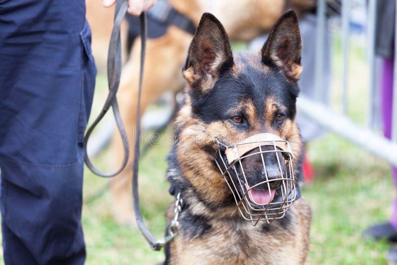 Αστυνομικός με ένα σκυλί αστυνομίας στοκ φωτογραφία με δικαίωμα ελεύθερης χρήσης