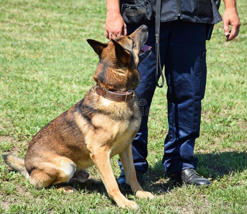 Αστυνομικός με το γερμανικό σκυλί ποιμένων του στοκ εικόνα