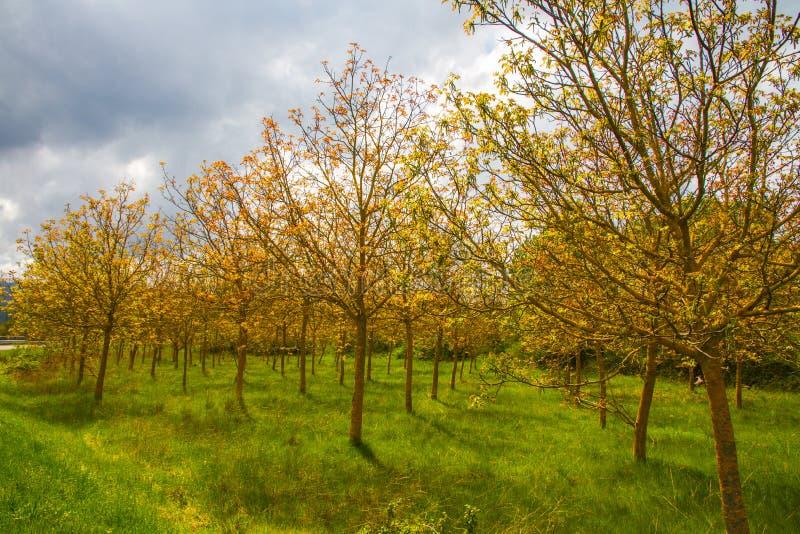 Ασυνήθιστα δέντρα στο έλος στοκ εικόνες με δικαίωμα ελεύθερης χρήσης
