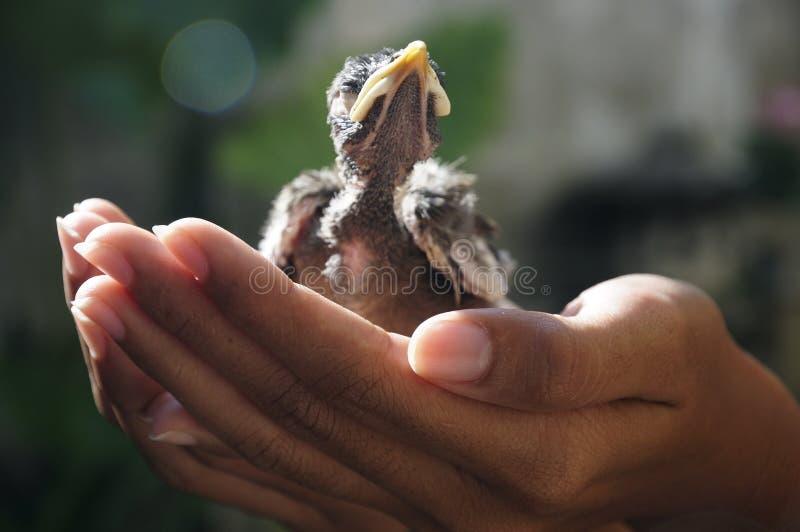 Ασφαλής ζωή πουλιών με το χέρι σας στοκ φωτογραφία με δικαίωμα ελεύθερης χρήσης