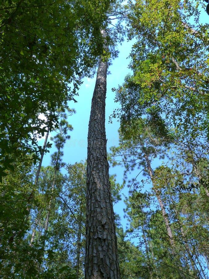Ατελείωτο δέντρο στοκ φωτογραφία με δικαίωμα ελεύθερης χρήσης