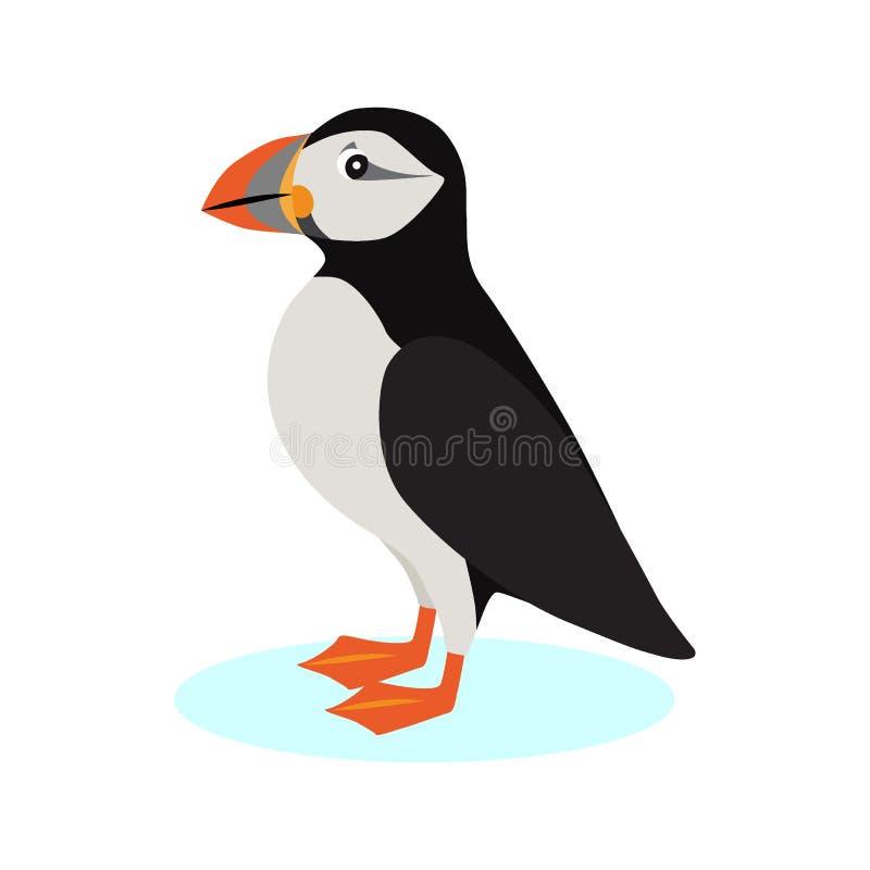 Ατλαντικό εικονίδιο puffin, πολικό πουλί με το ζωηρόχρωμο ράμφος που απομονώνεται στο άσπρο υπόβαθρο, είδη θαλασσοπουλιού, διάνυσ διανυσματική απεικόνιση