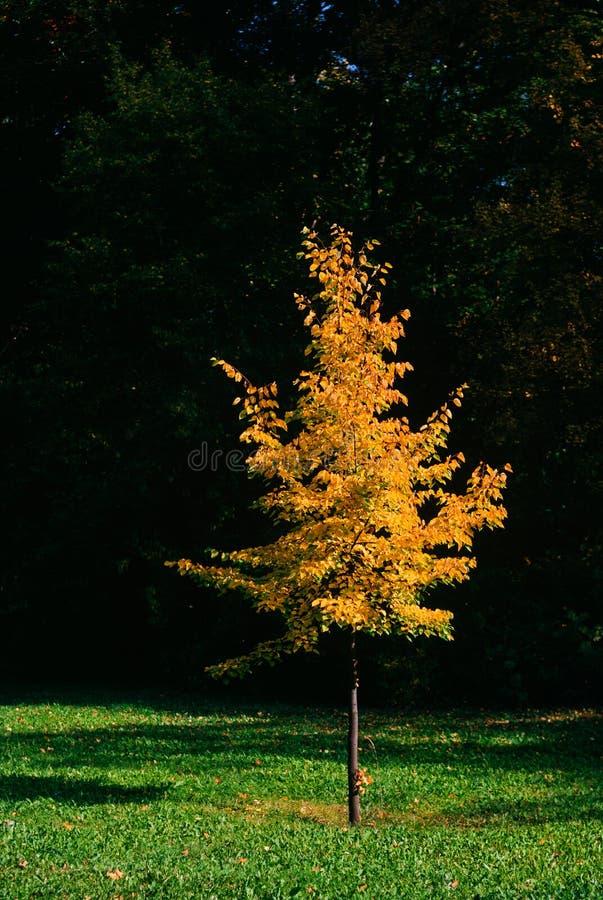 Ατμόσφαιρα φθινοπώρου στοκ εικόνα με δικαίωμα ελεύθερης χρήσης