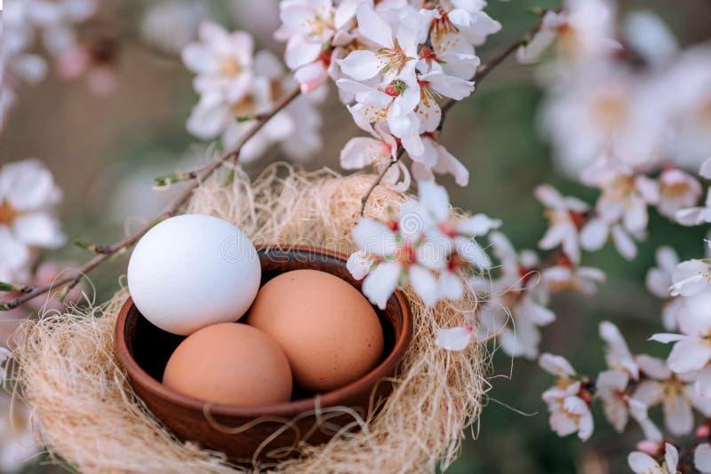 Αυγά για Πάσχα ενάντια στο σκηνικό ενός ανθίζοντας δέντρου άνοιξη στοκ φωτογραφίες