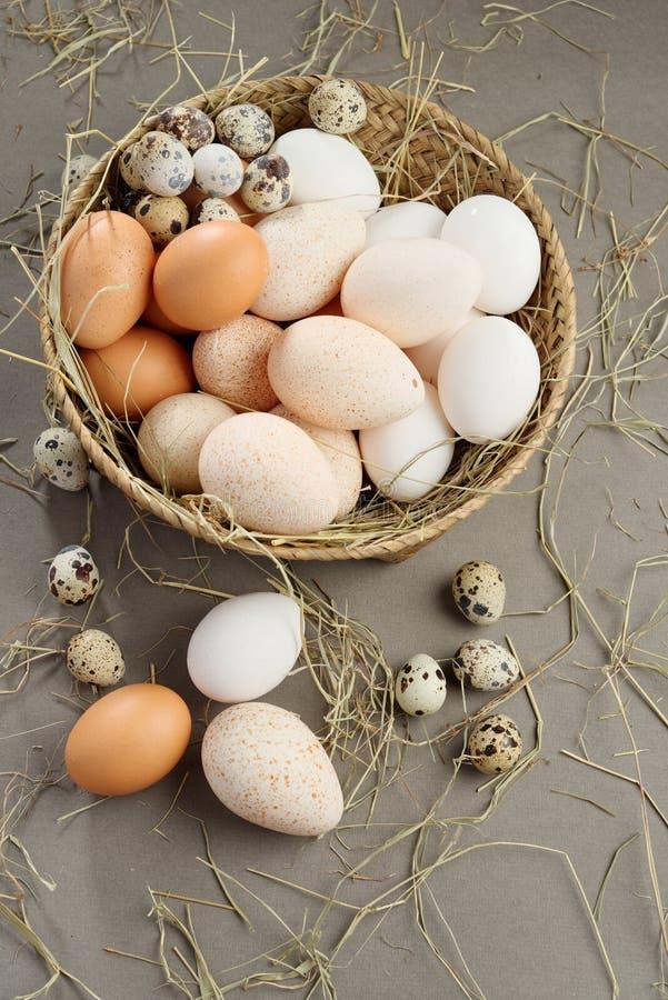 Download αυγά διάφορα στοκ εικόνες. εικόνα από άσπρος, αγροτικός - 62705088