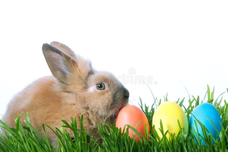 Αυγά και κουνέλι χρώματος Πάσχας στην πράσινη χλόη στοκ εικόνα με δικαίωμα ελεύθερης χρήσης