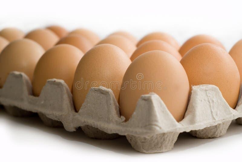 αυγά κιβωτίων στοκ φωτογραφίες με δικαίωμα ελεύθερης χρήσης