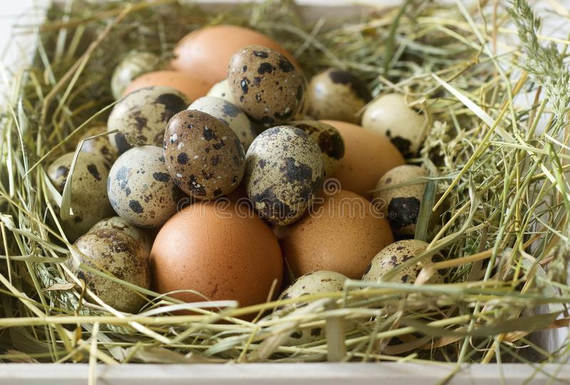 Αυγά κοτόπουλου και νησοπέρδικων σε ένα ξύλινο κιβώτιο Αγροτικό ύφος στοκ εικόνες