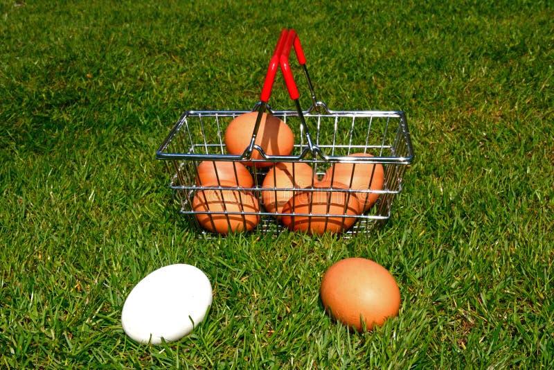 Αυγά κοτόπουλου σε ένα καλάθι αγορών στοκ φωτογραφίες