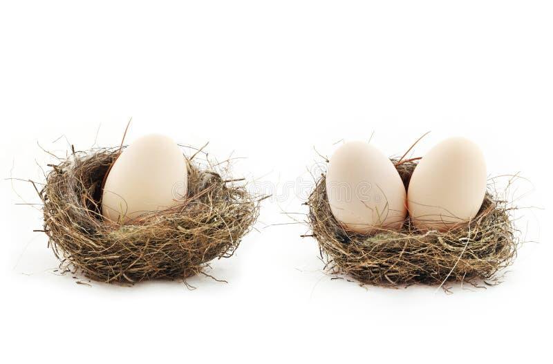 Αυγά μέσα στις φωλιές στοκ εικόνες