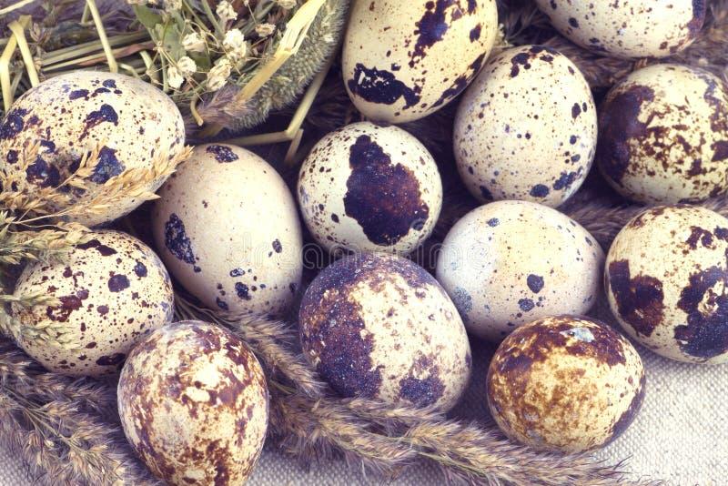 Αυγά ορτυκιών με τα ξηρά αρχειοθετημένα λουλούδια στο υπόβαθρο υφάσματος στοκ εικόνες με δικαίωμα ελεύθερης χρήσης