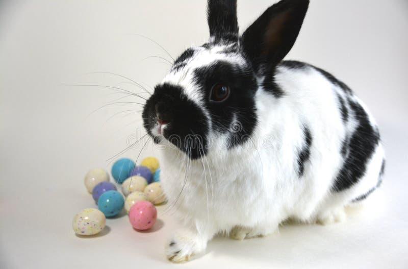 Αυγά Πάσχας και Bunny στοκ εικόνα