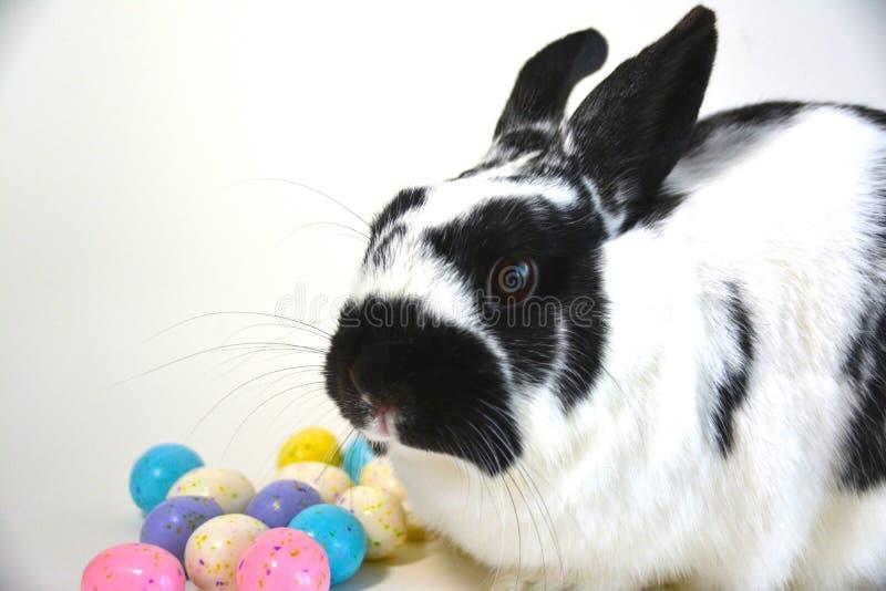 Αυγά Πάσχας και Bunny στοκ φωτογραφία