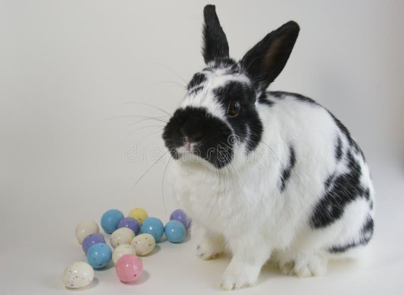 Αυγά Πάσχας και Bunny στοκ εικόνα με δικαίωμα ελεύθερης χρήσης